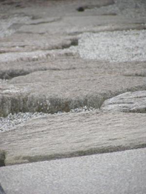 Vorschaubild zur Meldung: Steine-Garten ergänzt Lehrpfad am Forsthaus