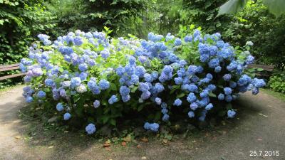 Foto zu Meldung: Hochdorfer Garten