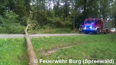 """Vorschaubild zur Meldung: Einsatz Nr. 124/2015 - """"Zeljko"""" sorgt für umgestürzte Bäume"""