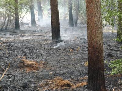 Foto zur Meldung: Waldbrand B158 gegenüber Bunkeranlage