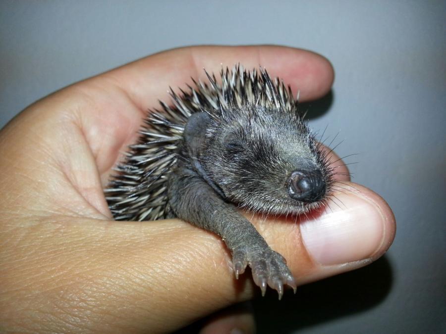 Tierschutzverein Vorpommersche Boddenlandschaft Hilfe Für