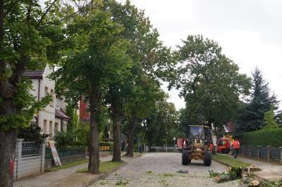 Foto zur Meldung: Vorarbeiten für neue Gehwege