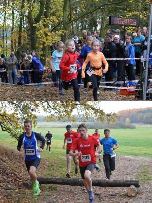 Foto zu Meldung: Landesmeisterschaften im Crosslauf im Laager Stadtwald
