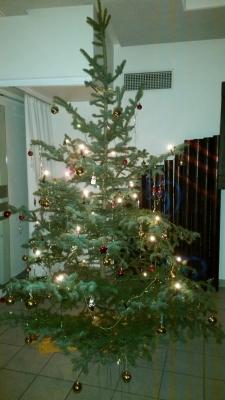 Foto zur Meldung: Ist denn schon Weihnachten?