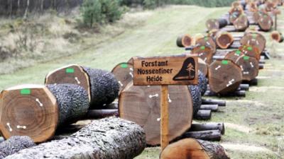 Foto zur Meldung: Forstverwaltung in MV : Forstämter bleiben, Personal aber muss gehen