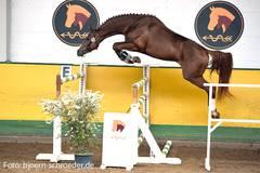 """Foto zur Meldung: Kür der Champions - verkaufte Pferde - Vereinsleben: es war ein rundum gelungener """"Tag der offenen Stalltür"""""""