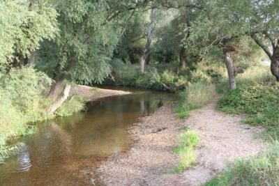 Foto zu Meldung: Gewässerentwicklungskonzept Ehle-Ihle