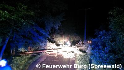 Vorschaubild zur Meldung: Einsatz Nr. 65/2016 - Baum über Strasse