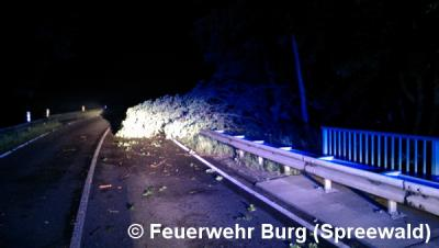 Einsatz Nr. 66/2016 - Baum über Strasse