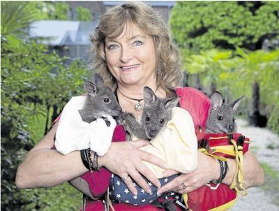 Foto zur Meldung: Heimatverein: Kängurubabys kommen zum Sommerfest nach Burgschwalbach