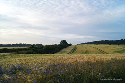 Foto zur Meldung: Mecklenburgische Schweiz