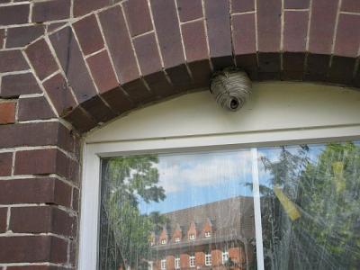 Foto zu Meldung: Die untere Naturschutzbehörde informiert: Wespen und Hornissen im Sommer