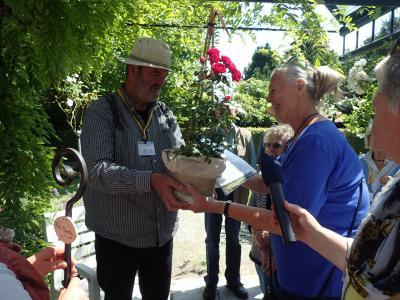Foto zu Meldung: Rosa Wizoka künftig im Rosarium Wilhelmshaven zu finden