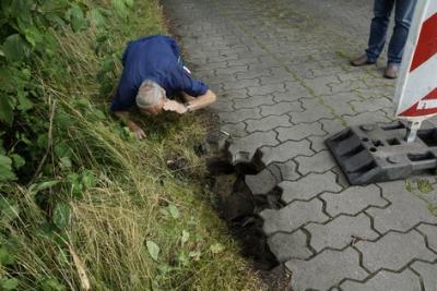 Foto zu Meldung: Biber verursacht Straßensperrung