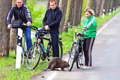 Foto zu Meldung: Biber erzwingt Wegesperrung bei Neustadt