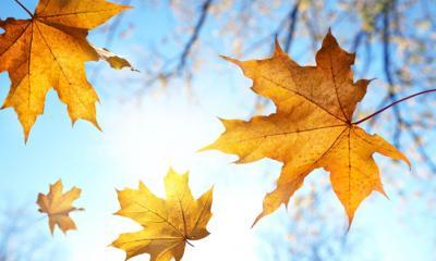 Foto zur Meldung: Der Herbst ist da...