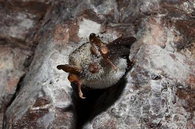 Foto zu Meldung: Die Fledermäuse kommen