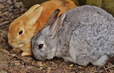 Foto zur Meldung: Kleintierschau in Schipkau