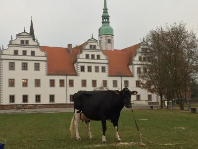 Vorschaubild zur Meldung: Fotoshooting vor dem Schloss Doberlug
