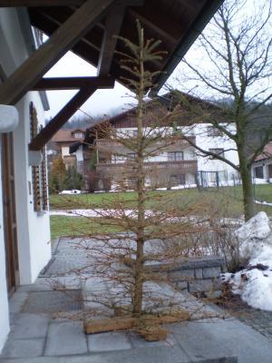 Foto zu Meldung: Christbaumabfuhr Weihnachten 2016