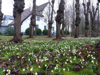 Foto zur Meldung: Frühlingserwachen im Hochdorfer Garten