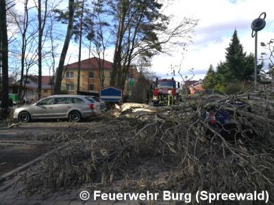 Vorschaubild zur Meldung: Einsatz Nr. 48/2017 - Sturmtief über Burg (Spreewald)