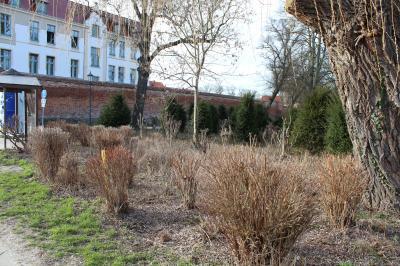 Foto zu Meldung: Alternative zum Familienpark: Zwei Flächen am Eingang zur Laga