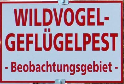 Foto zur Meldung: Und wieder Geflügelpest  Schmalensee erneut im Beobachtungsbezirk