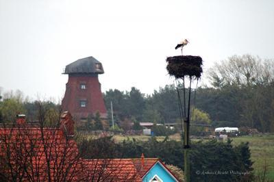 Foto zur Meldung: Storch - Peenestadt Neukalen