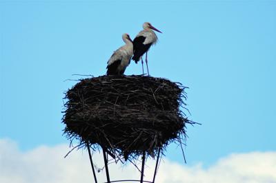 Foto zur Meldung: Zweiter Storch