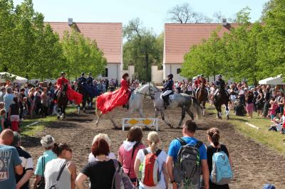 Vorschaubild zur Meldung: 13. Neustädter Fohlenfrühling- ein buntes Fest auf dem Hauptgestüt!