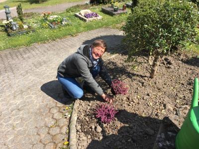 Vorschaubild zur Meldung: Friedhofspflanzen: Zu schade zum Wegschmeißen!