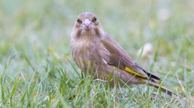 Foto zur Meldung: Vogelsterben