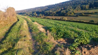 Foto zur Meldung: Rebpflanzung auf dem Bürgerweinberg am Samstag, 13. Mai ab 9 Uhr! Alle Igersheimer sind willkommen!!!