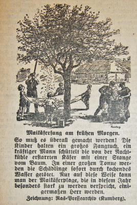 Foto zur Meldung: Vor 75 Jahren: Maikäferplage erwartet