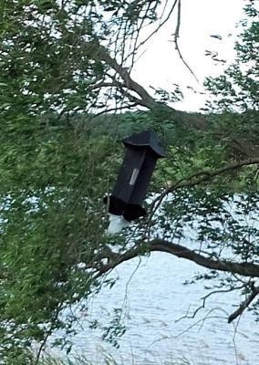 Vorschaubild zur Meldung: Asiatischer Laubholzbockkäfer - Pheromonfallen werden im Gemeindegebiet aufgehängt