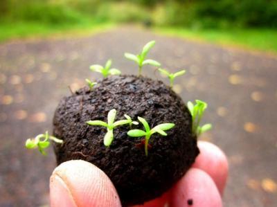 Ein selbst hergestellter Samenball, der im Garten verteilt wird.
