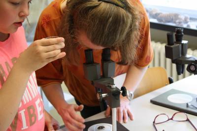 Mikroskopie in den Räumen der Naturwissenschaften-der Maikäfer ganz nah.