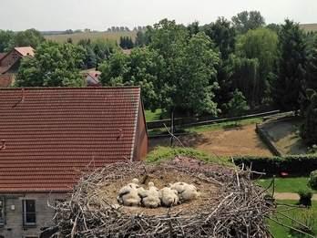 Vorschaubild zur Meldung: Geschwisterquartett kuschelt im Nest