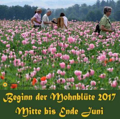 Vorschaubild zur Meldung: Tagesfahrt zur Mohnblüte in Germerode