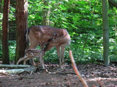 Foto zu Meldung: Aktuelles aus dem Perleberger Tierpark