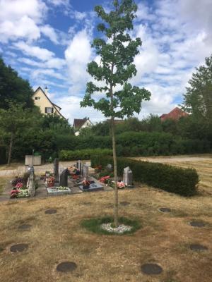 Vorschaubild zur Meldung: Neue Bestattungsform auf dem Friedhof Westerstetten