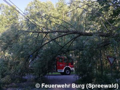 Vorschaubild zur Meldung: Einsatz Nr. 116/2017 - Baum umgefallen