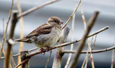 Foto zu Meldung: Vogelstimmengewirr im Babelsberger Park: Vogelkundliche Führung