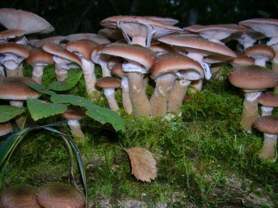 Foto zu Meldung: Pilzausstellung, Vortrag und Bestimmung von mitgebrachten Pilzen, Verkostung