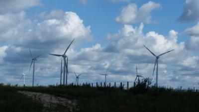 Windkraftanlagen hinter Zernitz