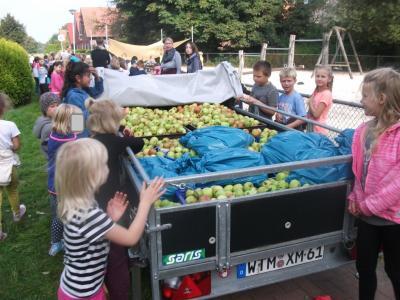 Foto zur Meldung: Große Apfelernte in Wiesede