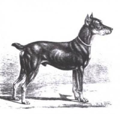 Foto zur Meldung: Vor 130 Jahren: Pinscher verloren – Hilferuf eines Rittmeisters