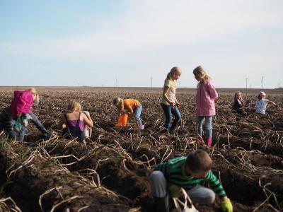 Vorschaubild zur Meldung: Ausflug zum Kartoffelacker
