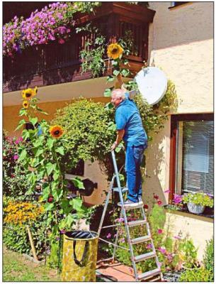 Vorschaubild zur Meldung: Der Meister der Sonnenblumen